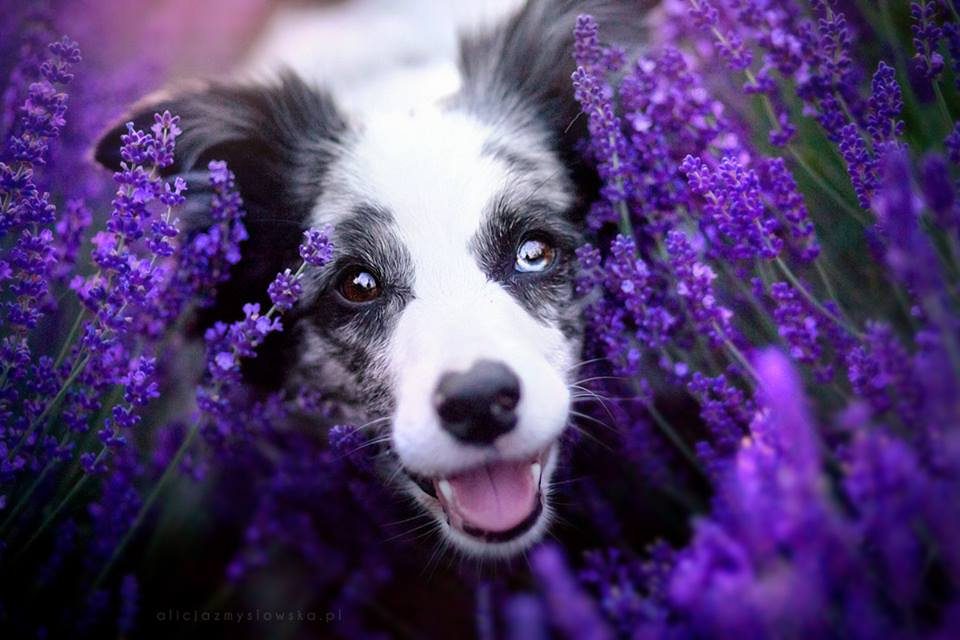 Amazing Dogs Photography - Page 2 Beautiful-Animal-Photography-25