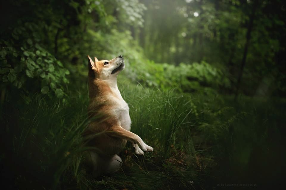Amazing Dogs Photography Beautiful-Animal-Photography-3