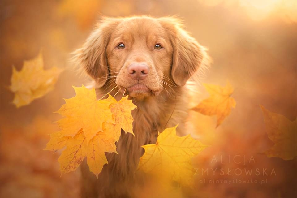 Amazing Dogs Photography Beautiful-Animal-Photography-5