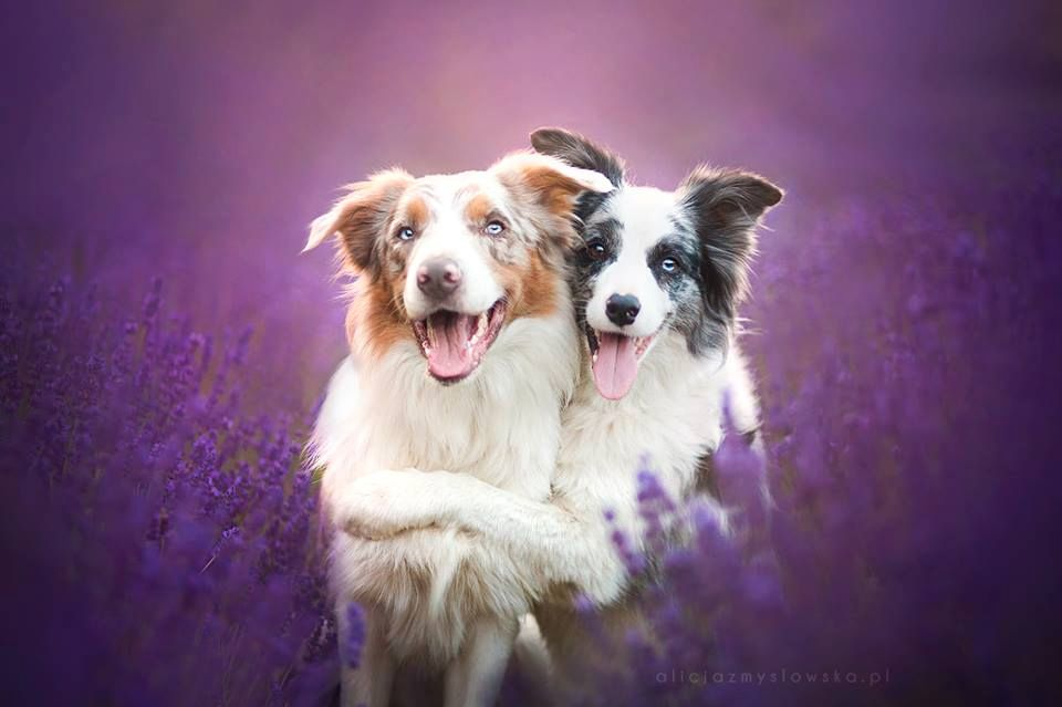 Amazing Dogs Photography Beautiful-Animal-Photography-6