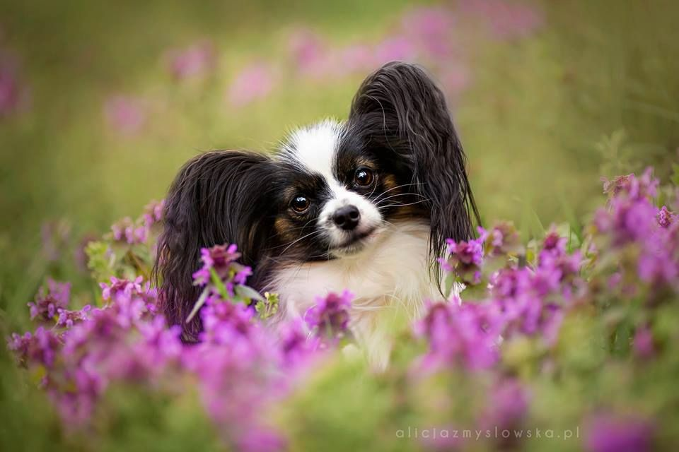 Amazing Dogs Photography Beautiful-Animal-Photography-7