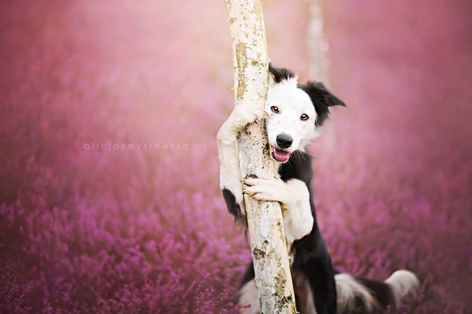 Amazing Dogs Photography Beautiful-Animal-Photography-8