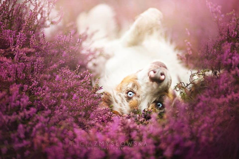 Amazing Dogs Photography Beautiful-Animal-Photography-9