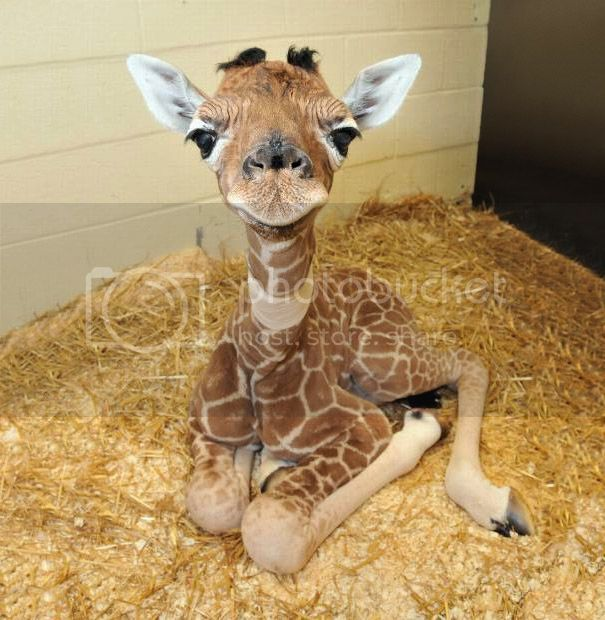Baby Animal Pictures That Will Make You Go 'Aww' Cute-Baby_Animals-3