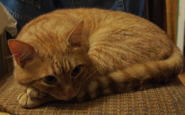 Animal companion dead – what now? Cat