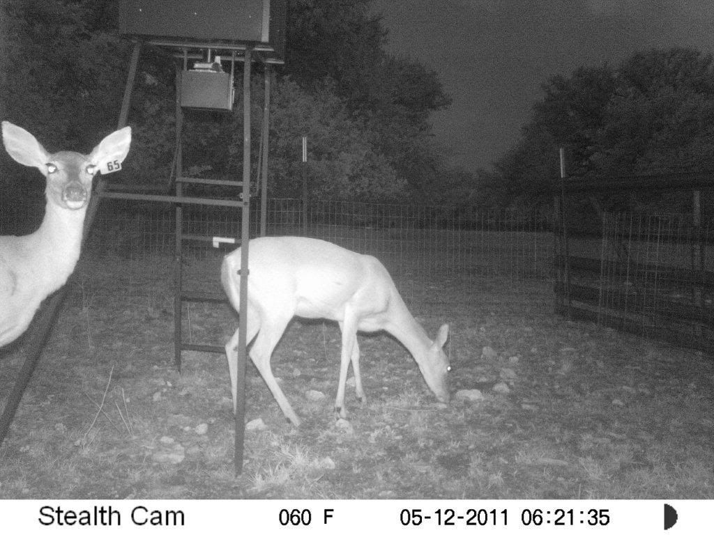 Game Camera Photos Feeder1102