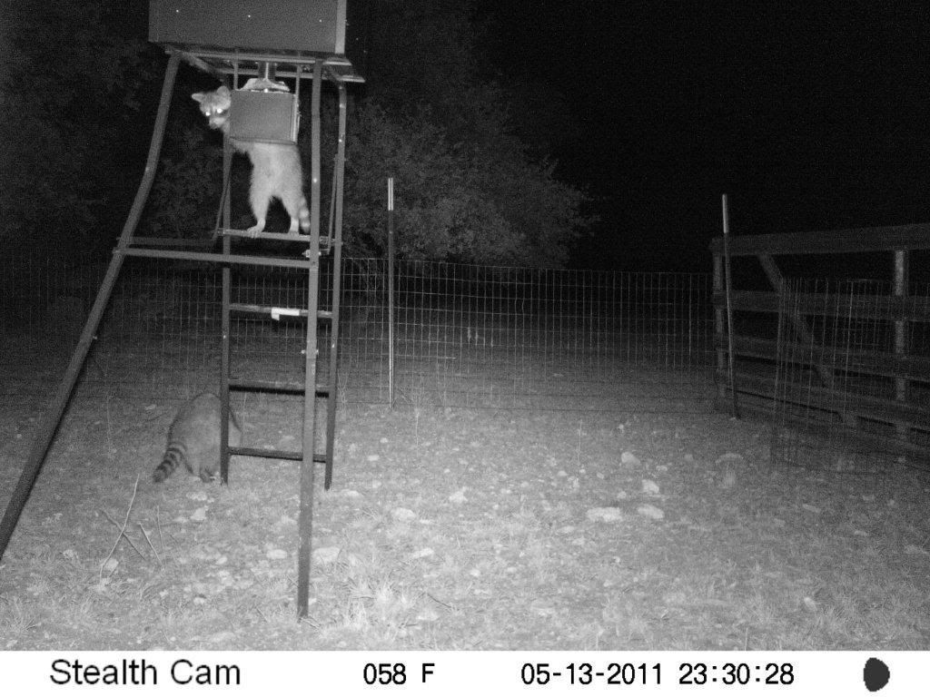 Game Camera Photos Feeder4712