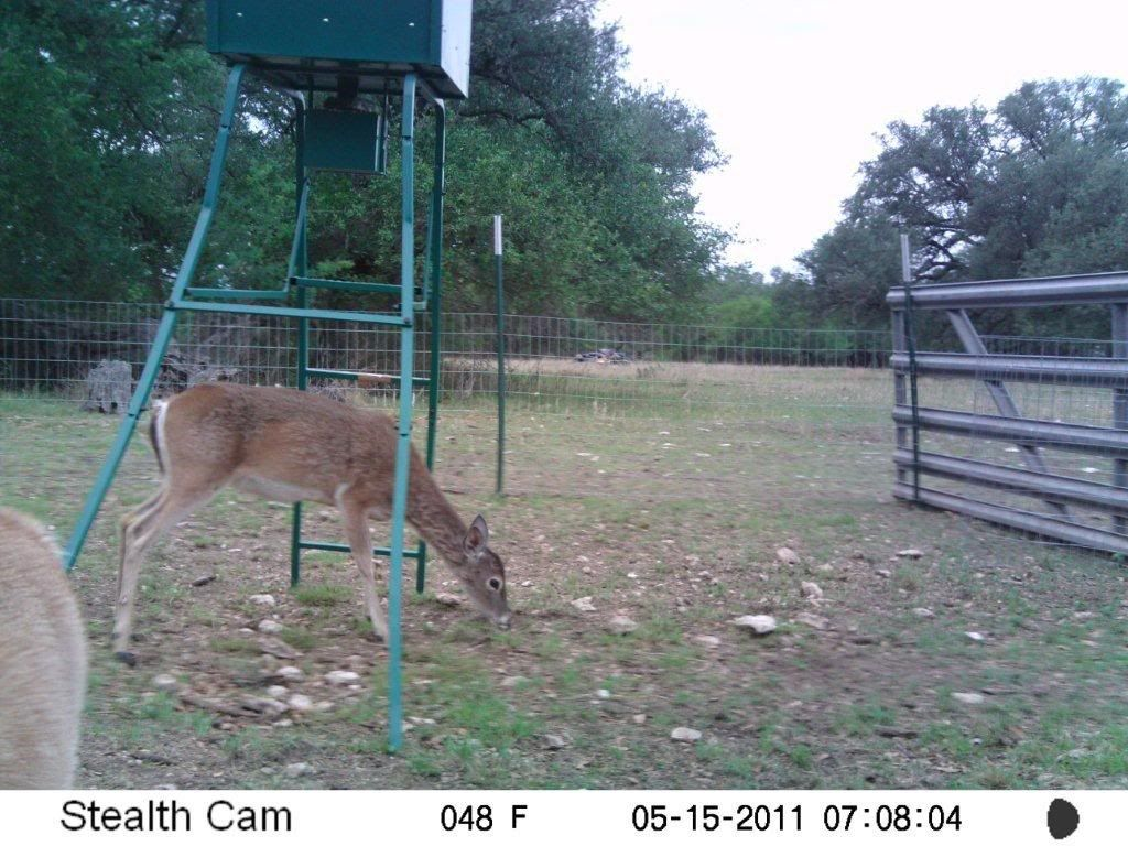 Game Camera Photos Feeder7862