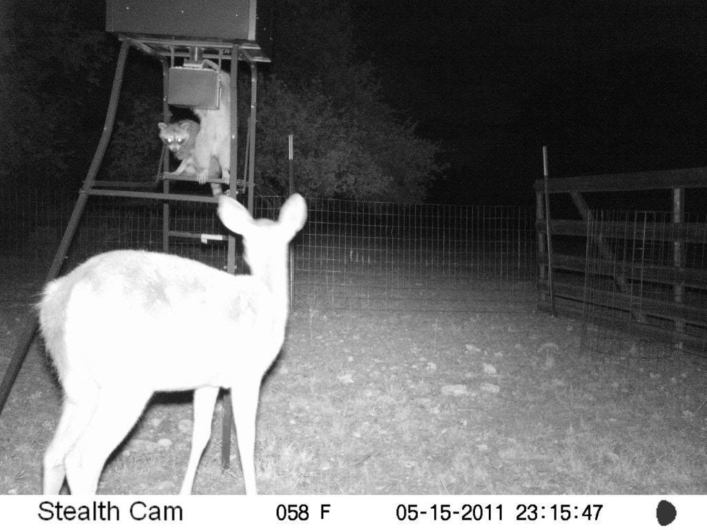 Game Camera Photos Feeder8572