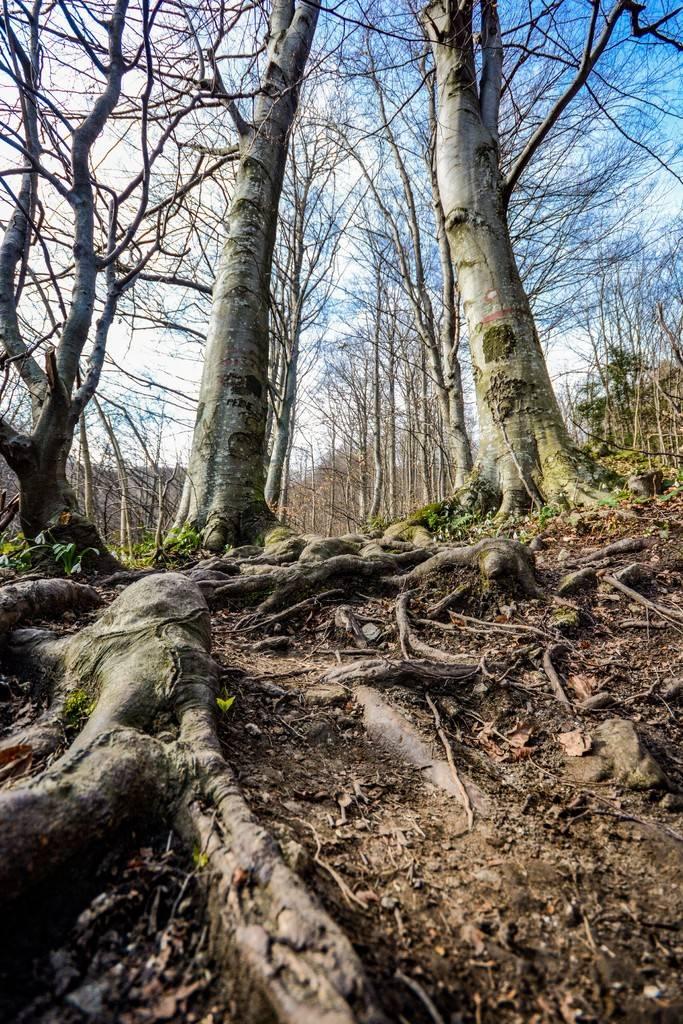 Day hike - Ivanščica DSC_0758_zpsnyialiwf