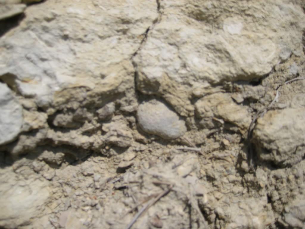 fotos de fosiles in situ 060