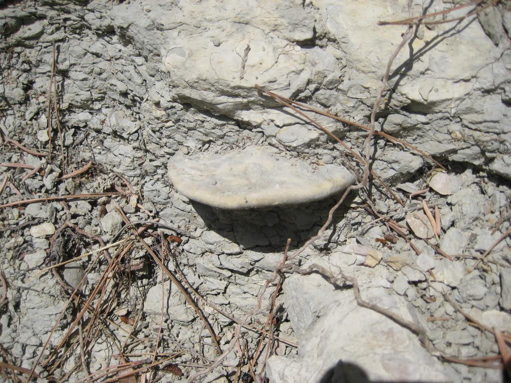 fotos de fosiles in situ IMG_3185