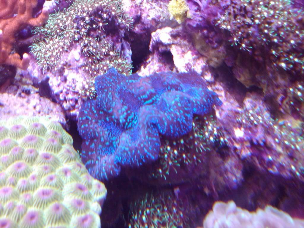 My 180 gallon coral holding cell - PICTURE INTENSE! April1028
