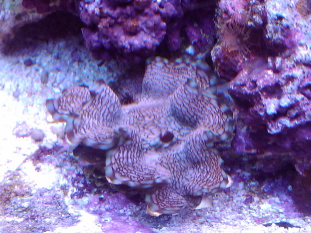 My 180 gallon coral holding cell - PICTURE INTENSE! April1031