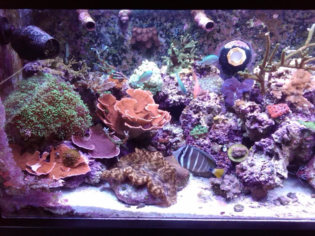 My 180 gallon coral holding cell - PICTURE INTENSE! April1040