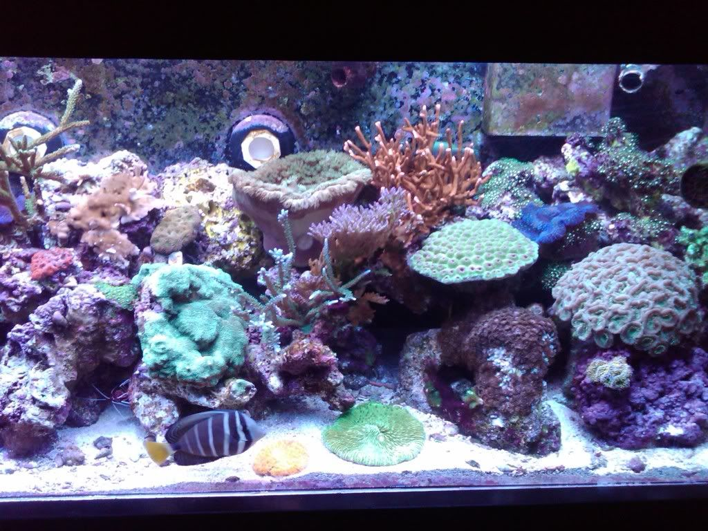 My 180 gallon coral holding cell - PICTURE INTENSE! April1042
