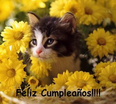 FELICIDADES BEGO !!!! Gato