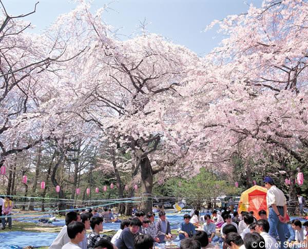 [Đời sống - Văn hóa] Các lễ hội trong năm của Nhật Hanami