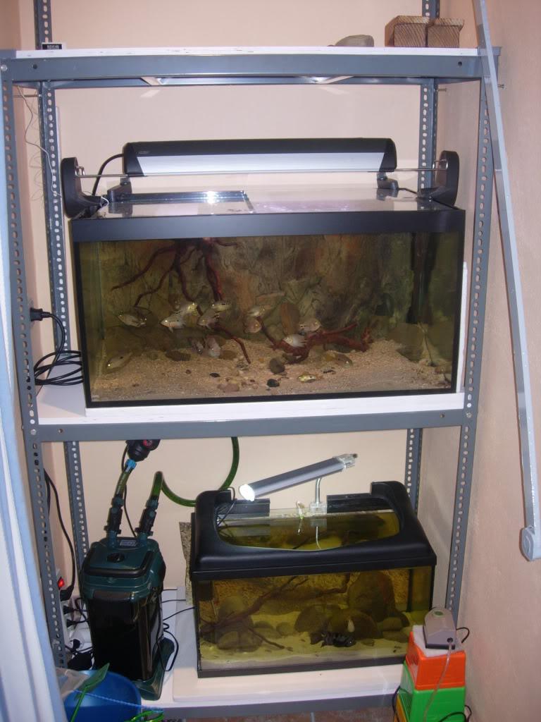 Proyecto bateria de acuarios DSCN4531