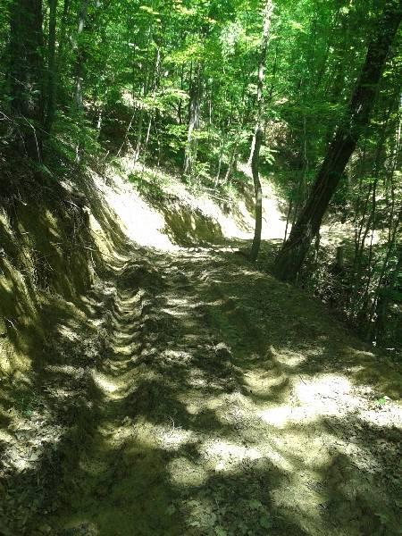 Šumski putevi Slika001