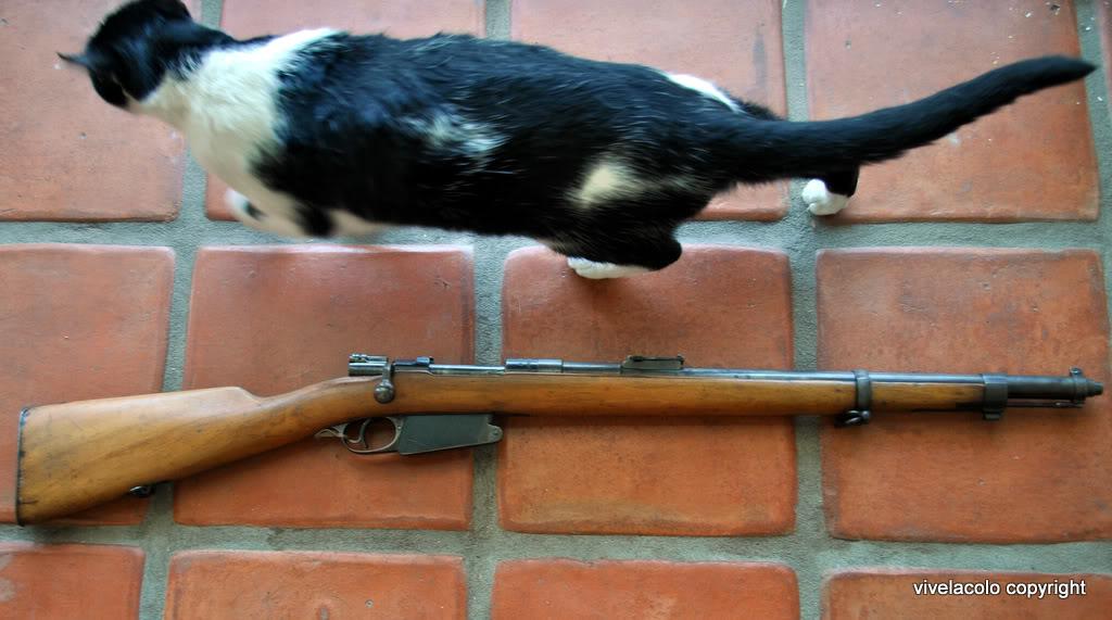 Carabine modèle 1916 DSC_0211-2
