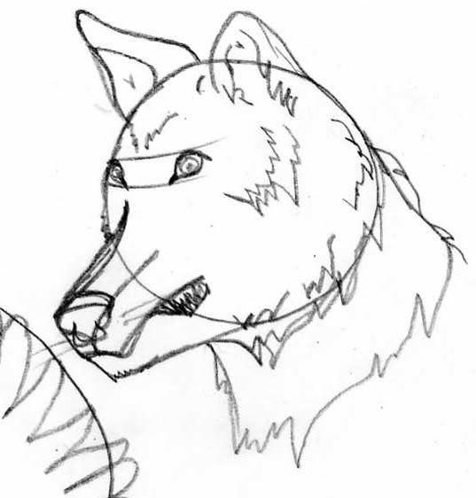 Galería de dibujos de Kivana - Página 2 Loba