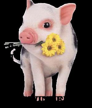Who's a Siggy Piggy - Page 7 SiggyPiggyWinner
