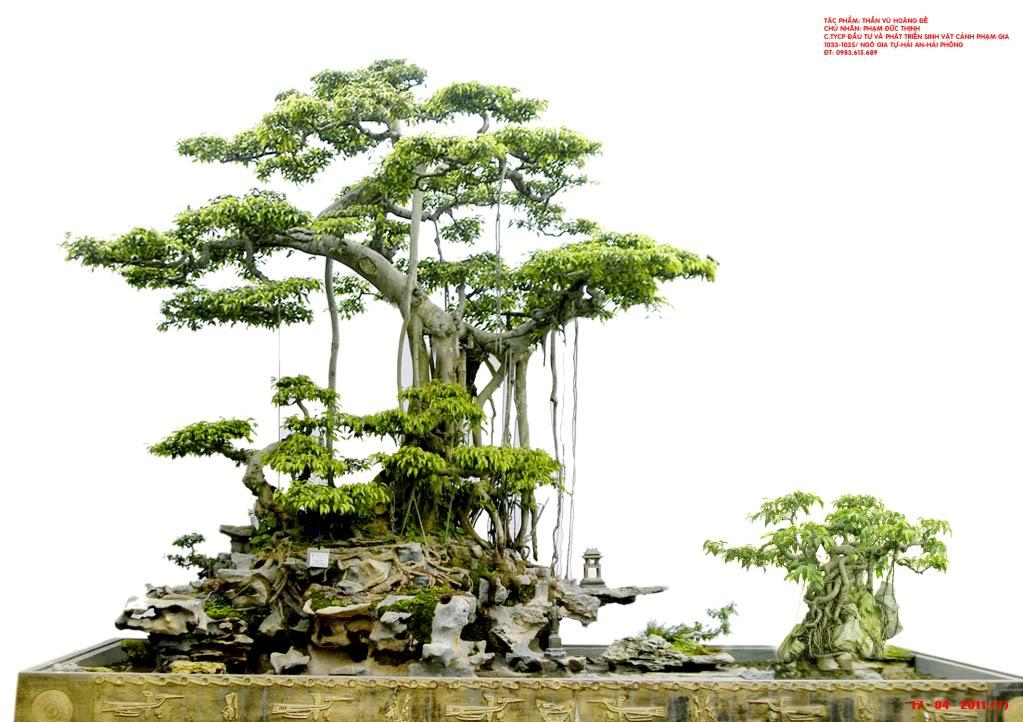 Stock Ornamental Vietnam Bonsai