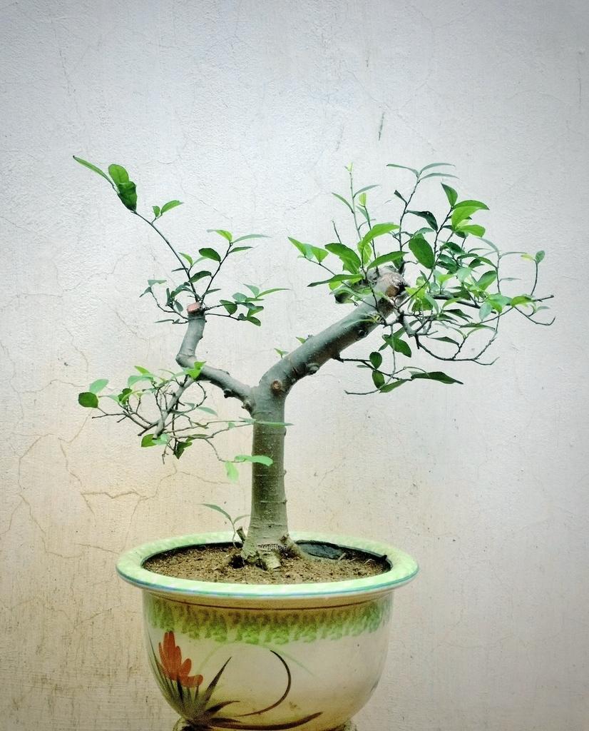 Early SUMMER in VIETNAM & Updating some tree in my garden :D Duoi%20T6.%202015%202