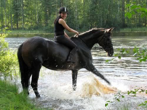 Žirgų registracija 001
