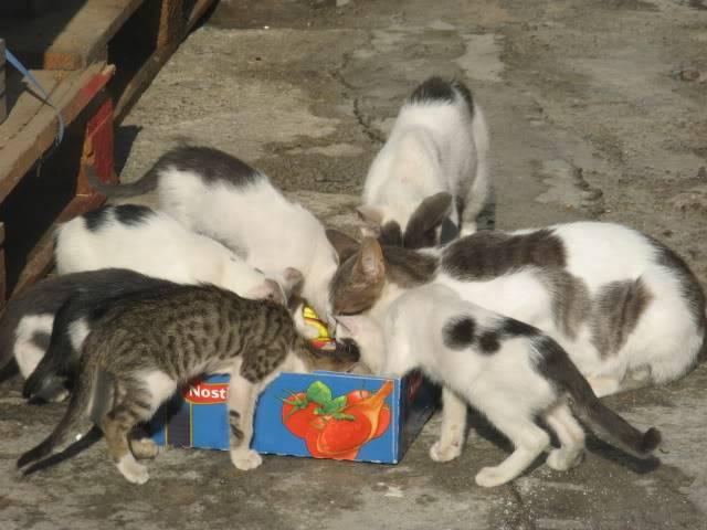 SΟS! Οι γάτες χρειάζονται βοήθεια IMG_5921