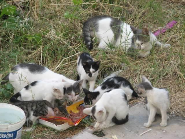SΟS! Οι γάτες χρειάζονται βοήθεια IMG_6019