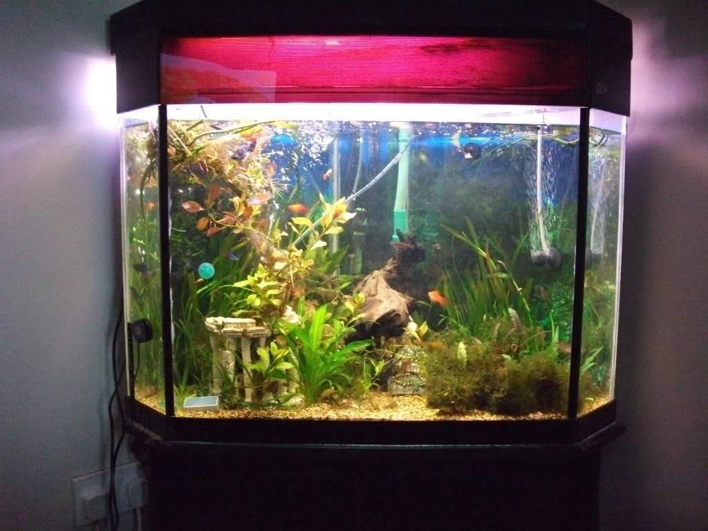 my corner tank DSCF2114