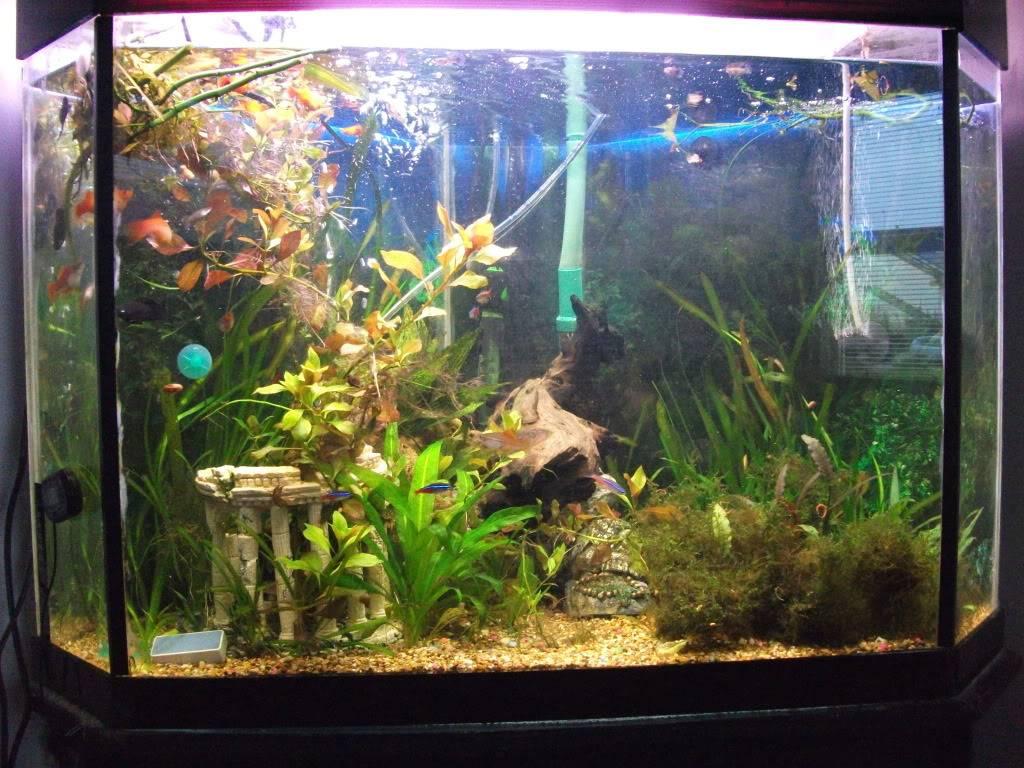 my corner tank DSCF2115