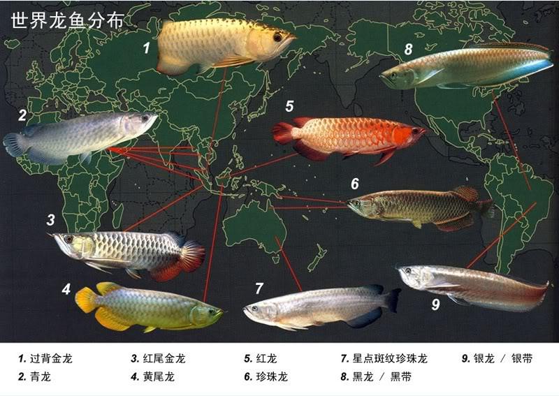 Les poissons qui n'ont rien à faire en aquarium All