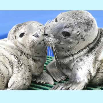 Animals - Page 2 Kissing-harbors-new20360
