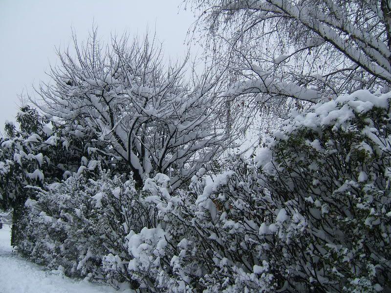 la neve 2008 DSCF1904_ridimensionare