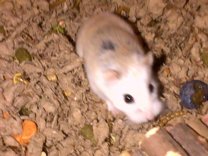 Run Free Millie BasingstokeandDeane-20121206-00177_zps5eeddcb9