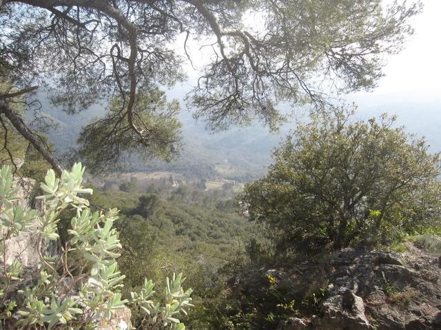 Photos Territoires et Paysages  - Page 3 Foretfervier2011001