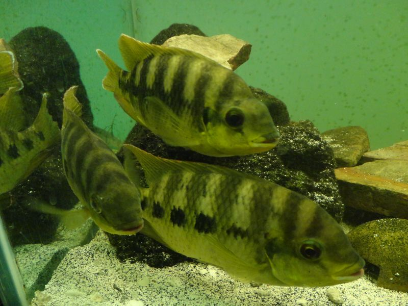 Anyone need some native fish? DSC01035
