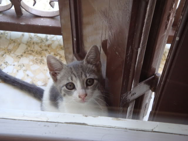 Γατάκι με ρινοτραχειΐτιδα (κρυμμένο στην ντουλάπα μου...) DSC02254