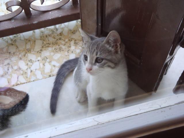 Γατάκι με ρινοτραχειΐτιδα (κρυμμένο στην ντουλάπα μου...) DSC02257
