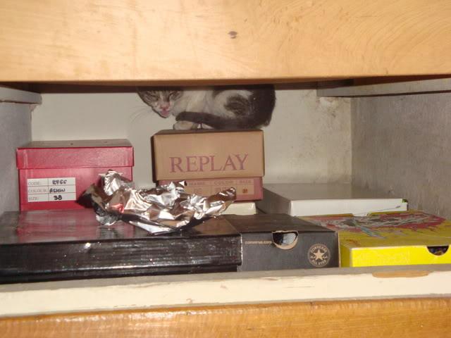 Γατάκι με ρινοτραχειΐτιδα (κρυμμένο στην ντουλάπα μου...) DSC02738