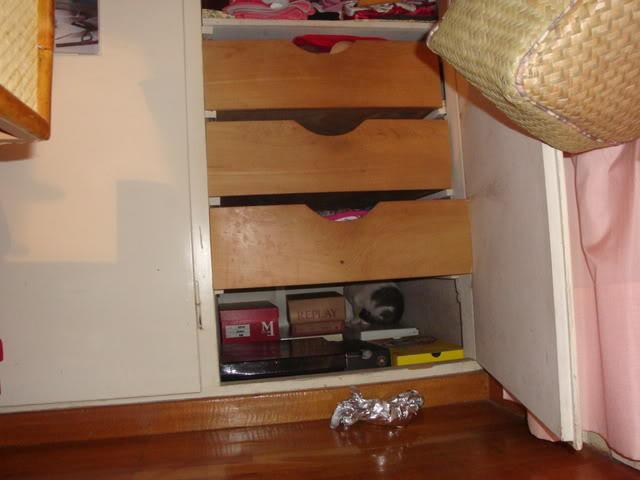 Γατάκι με ρινοτραχειΐτιδα (κρυμμένο στην ντουλάπα μου...) DSC02740