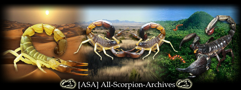 """""""Like"""" All-Scorpion-Archives on Facebook for the latest updates! ASA_Banner_v5"""