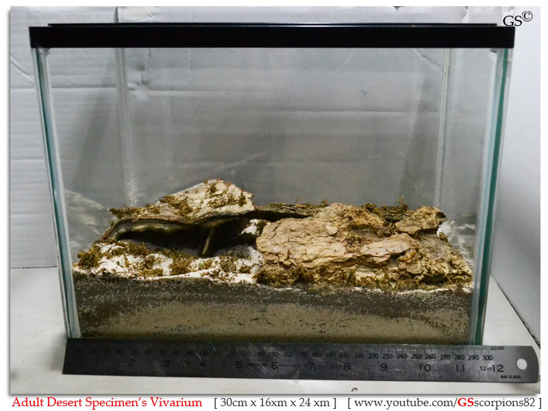 [ASA] Desert and Xeric Shrubland Scorpions' Caresheet Desert_Vivarium_by_GSscorpions82_pic1