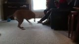 """Nutmeg's first """"play date"""" Th_IMG_0771"""