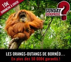 Sunday Surprise, de l'exceptionnel tous les dimanches! - Page 6 Sunday_Surprise_Borneo_zpse67fb009