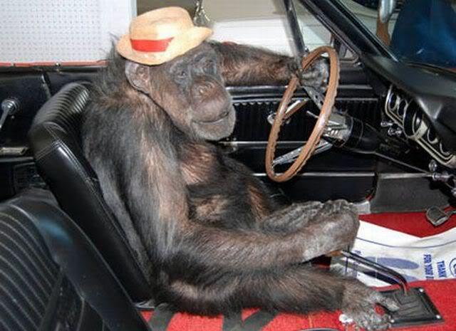 WOW Dragons big shizouka announcement Monkey-driver