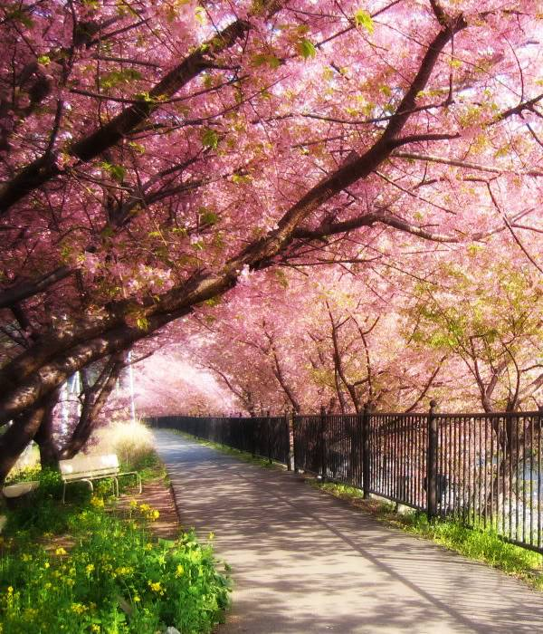 Mis creaciones photoshoperas ~ Sakurapaisaje